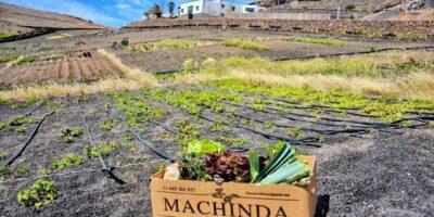 Finca Machinda, Lanzarote: en tus manos mucho más que una cesta de Navidad